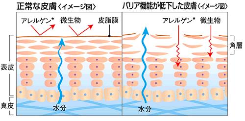 肌のバリア機能