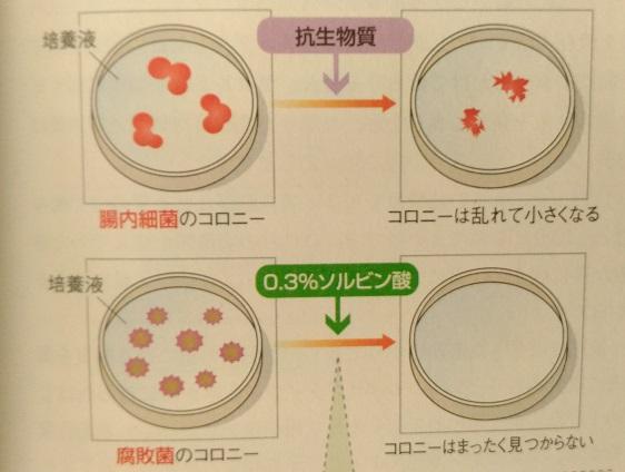 食品添加物が腸内環境を悪化させる実験