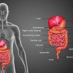 胃腸を健康にしてニキビを治す7つのステップ