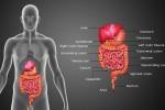 胃腸の健康
