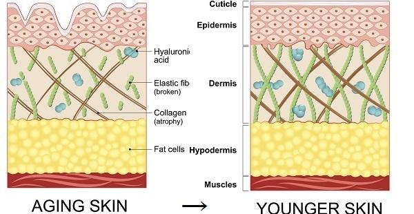 コラーゲン増殖で若返る肌