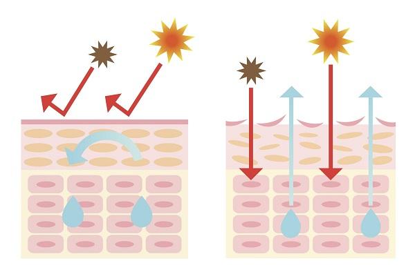 肌バリア機能のイメージ